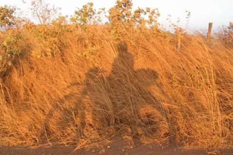 Cambodia, shadow-on-tall-grass